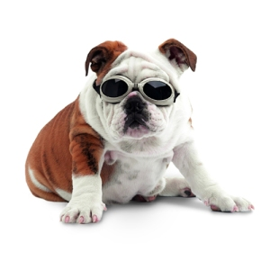 doggles_dog_glasses